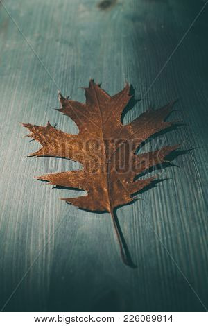 Oak Tree Leaf On Wooden Rustic Background. Old Grunge Wood With Oak Leaves As Background. Texture An