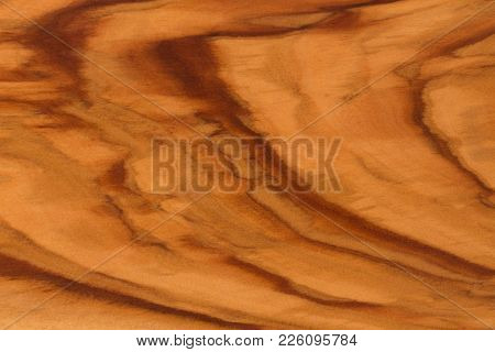 Olive Tree Wood Slice With Texture And Details. Hi Res Photo.