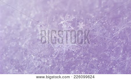 Light Pinky Snow Background With White Snowflakes. Macro Photo Of Snowdrift Surface With Real Snow C