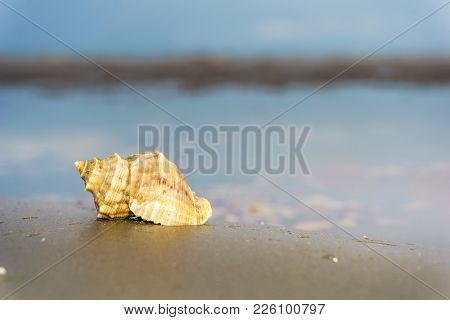 hermit crab at the beach on morning