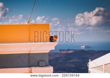 Santorini Domestic Cat On Top Of The Roof, Greece