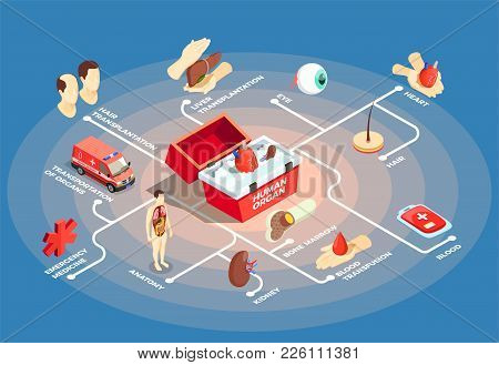 Transplantation Isometric Flowchart With Donor Heart In Medical Case For Human Organs Anatomy Dummy