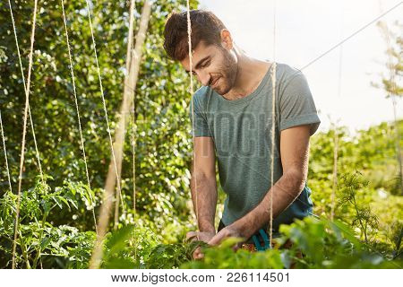 Sunny Morning In Garden. Close Up Of Young Good-looking Mature Hispanic Male Gardener In Blue Shirt