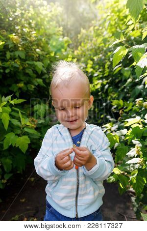 Emotions In The Infant's View, The Kid Looks At The Leaf Of The Plant With Pleasure