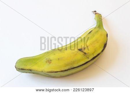Low Side View Of Half Ripe Burro Banana, Also Orinoco, Bluggoe, Horse, Hog Or Largo Banana, Isolated