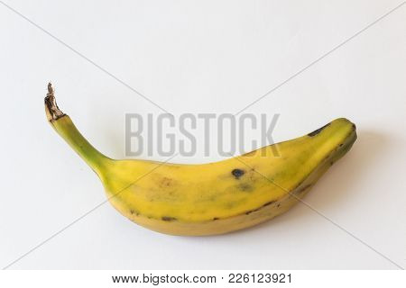 Overhead View Of A Fully Ripe Burro Banana, Orinoco, Bluggoe, Horse, Hog And Largo Banana, Isolated