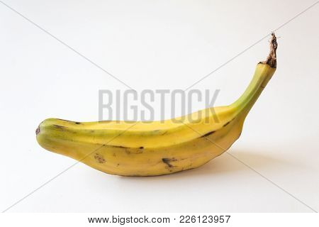 Standing View Of A Fully Ripe Burro Banana, Orinoco, Bluggoe, Horse, Hog And Largo Banana, Isolated