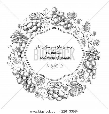 White Colored Round Frame With Grape Bunches, Stem And Elegant Squiggles Hand Drawn Sketch Vector Il