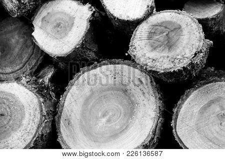Logs Placed In Order Creating A Patern