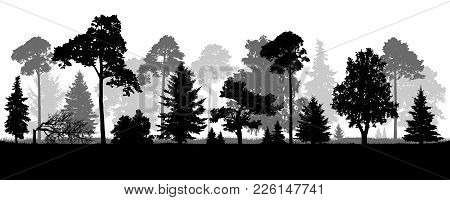 Coniferous Natural Forest Trees Set Silhouette. Background Of Nature Wood