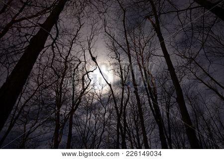 Full Moon Above The Tree Tops Of A Woods At Night, Spooky, Mysterious, Haunting, Halloween