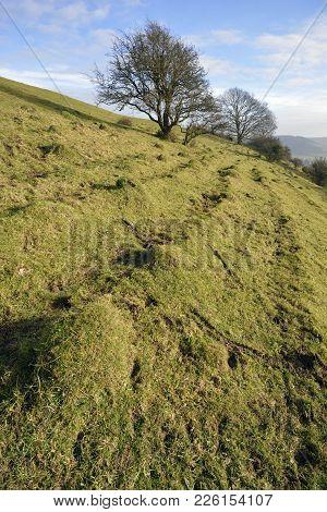 Collard Hill
