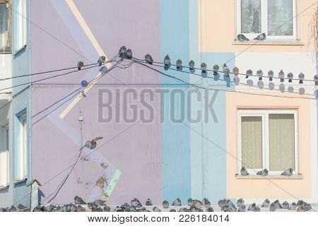 Pigeons Are Sitting On Wires. Many Birds Sit On Wires Near The House. Bird On The Roof Of The House.
