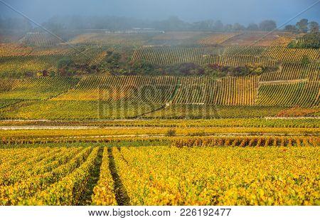 Vineyards In The Foggy Autumn Morning, Burgundy, France