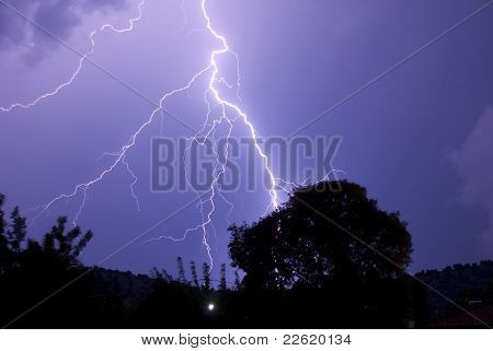 Lightening Roots At Night Striking Near Tree