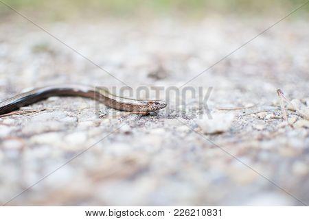 Natur, Tiere, Wildlife, Schlange, Blindschleiche, Makro, Herbst