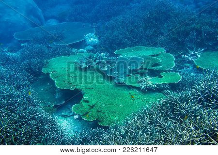 Tropical Wildlife: Corals And Reef. Diving In Ocean.