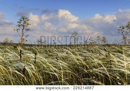 Springtime. Alta Murgia National Park: Tipical Grassland Width Ferula Communis. Italy, Apulia. Hilly