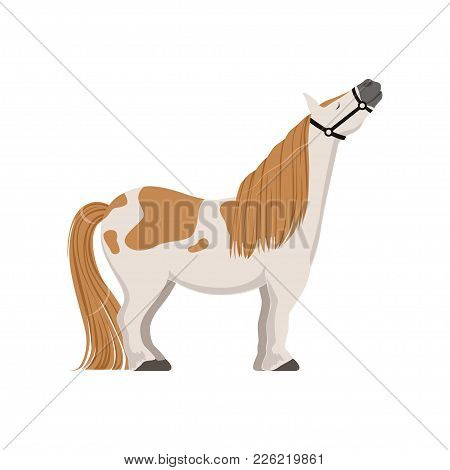 Cute Spotted Pony, Thoroughbred Horse Vector Illustration Isolated On A White Background