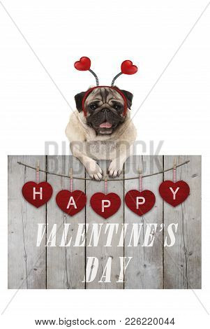 Cute Pug Puppy Dog Leaning On Wooden Fence Of Used Scaffolding Wood With Red Hearts And Text Happy V
