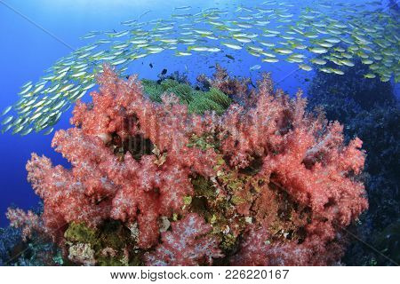 Vivid Color Of Underwater World At Similan Marine National Park A Famous Tropical Reef Of The Southe