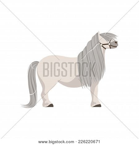 White Pony With Grey Mane, Thoroughbred Horse Vector Illustration Isolated On A White Background