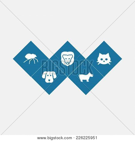 Set Of 5 Zoology Icons Set. Collection Of Cat, Spider, Hippopotamus And Other Elements.