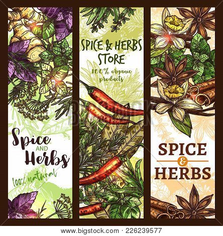 Herbs And Spices Store Sketch Banners Design Template. Vector Organic Basil And Horseradish Spice Of