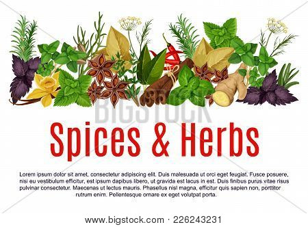 Herbs And Spices Store Poster Design Template. Vector Organic Thyme, Rosemary Or Basil And Horseradi