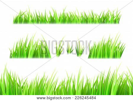 Grass Vector Isolated On White Background. Tufts Of Grass. Green Summer Lawn Set. Vector Illustratio