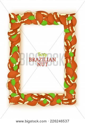 Vertical Rectangle Frame Composed Of Delicious Brazilian Nut. Vector Card Illustration. Nuts Brazil