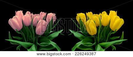 Bouquets Of Tulips Isolated On A Black Background. Horizontal Photo.