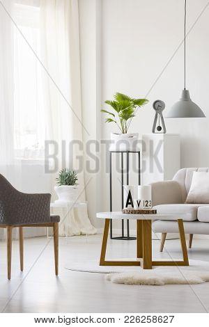 Plant In Bright Flat Interior