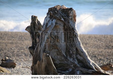 Large Solitary Driftwood Log On A Beach