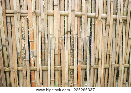 Bamboo Wall Or Bamboo Fence In Asia