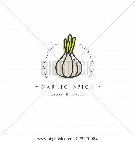Packaging Design Template Logo And Emblem - Herb And Spice - Garlic Head. Logo In Trendy Linear Styl