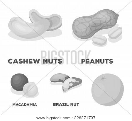 Peanuts, Cashews, Brazil Nuts, Macadamia.different Kinds Of Nuts Set Collection Icons In Monochrome