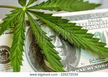 Money With Marijuana Leaves. Cannabis With Hundred Dollar Bill Of The Usa Franklin