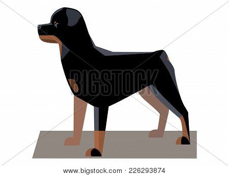 Rottweiler Minimalist Image - A Large Powerful Dog Of A Tall Black-and-tan Breed