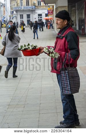 Unidentified Old Man, Sell Bouquets Of Snowdrops On The Street, On February 24, 2015 In Craiova, Rom