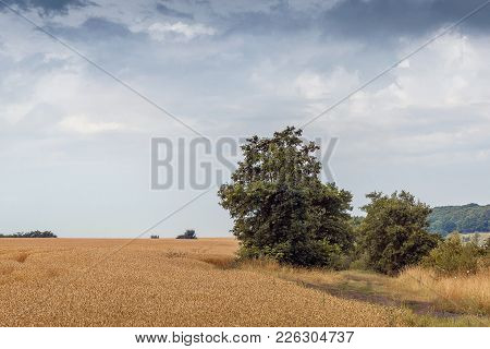Summer Landscape: Field With Ripening Wheat, Sky With Clouds