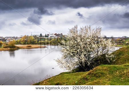 Spring Landscape: River, Reflection Of Clouds In The River, Flowering Tree On The River Bank
