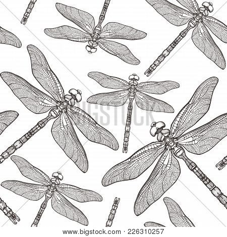 Seamless Pattern With Dragonfly's. Dragonfly Background. Isolated On White Background. Tattoo Sketch