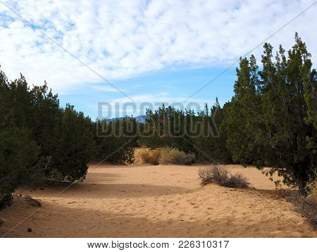Desert Landscape With Plants And Sandy Dirt.