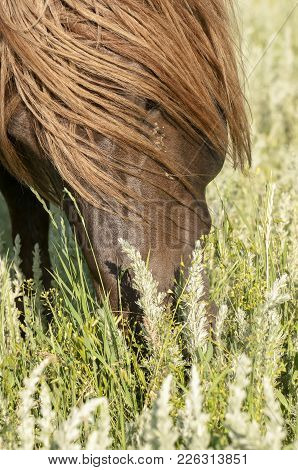 Close-up Portrait Of Wild Horses In The Steppe. A Herd Of Wild Horses Shown On Water Island In Atmos