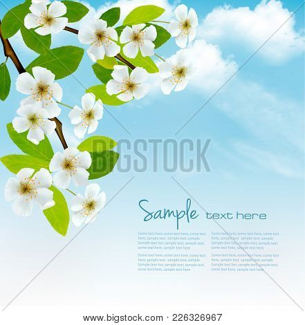 Nature Spring Background With Blossoming Tree Brunch And Blue Sky. Vector Illustration.