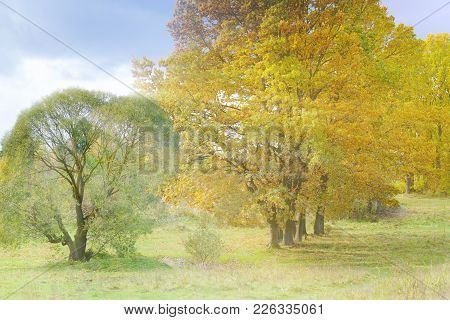 Beautiful Views Of Autumn Landscape. Beautiful View Of The Autumn Forest - The Sun Shines Brightly,