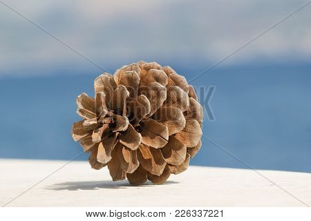 Dry Fir Cone On Marble On Sea Background