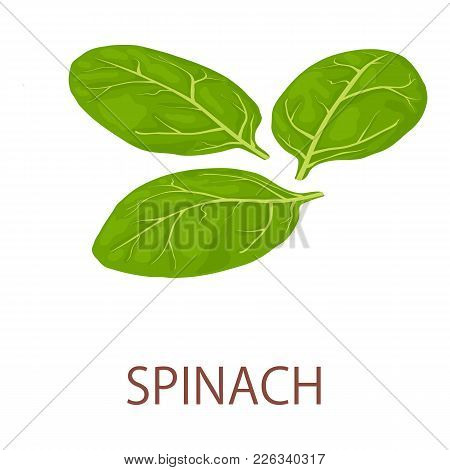 Spinach Icon. Isometric Illustration Of Spinach Vector Icon For Web
