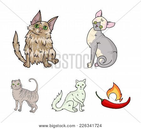 Turkish Angora, British Longhair And Other Species. Cat Breeds Set Collection Icons In Cartoon Style